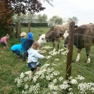 kinderen-kijken-en-voeren-dieren-lange-wei
